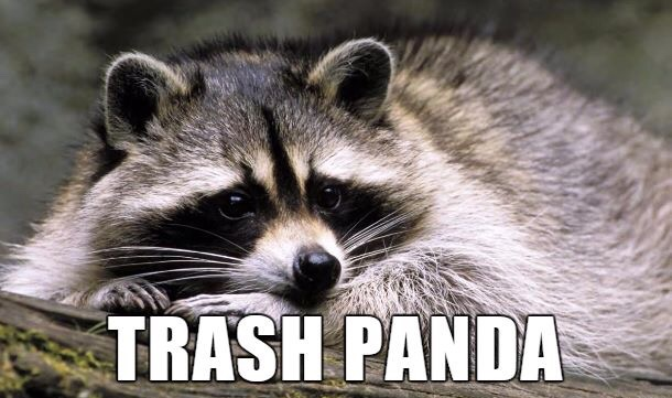 animal-kingdom-trash-panda-raccoon